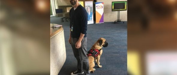 How Clover the PTSD service dog changed one man's life
